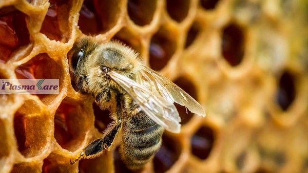 Súc họng miệng PlasmaKare dạng túi chứa Keo ong nhập khẩu Italy 1