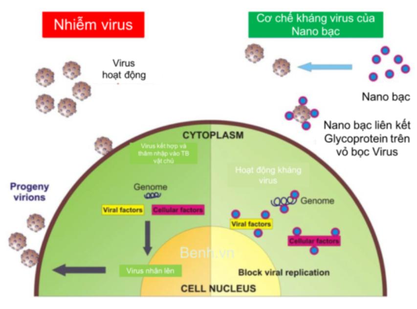 Phức hệ nano bạc chuẩn hoá TSN - Nano bạc biến tính duy nhất kháng virus mạnh 1