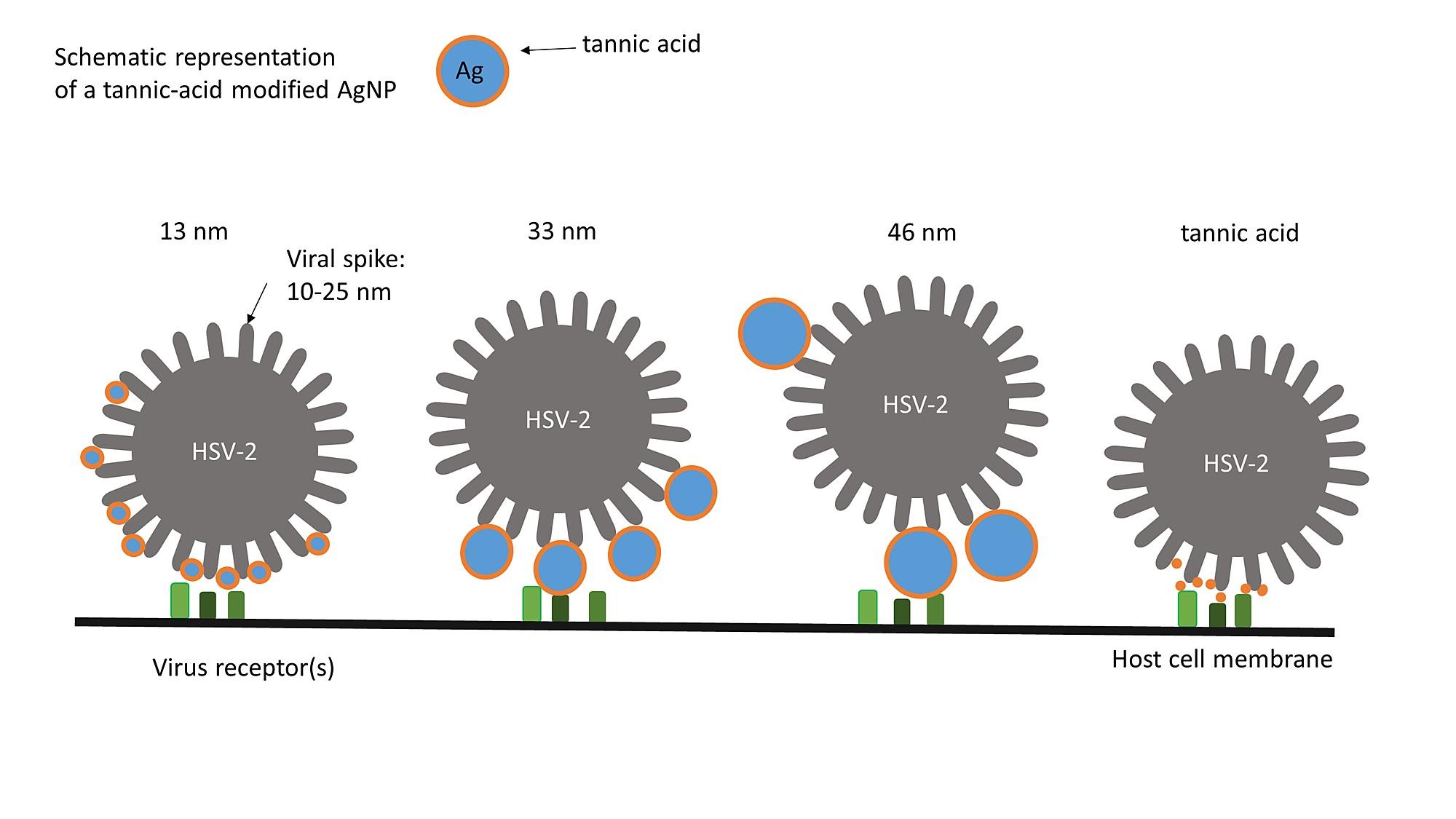 TSN diệt virus nhờ có cấu trúc đặc biệt, đặc hiệu trên virus 1